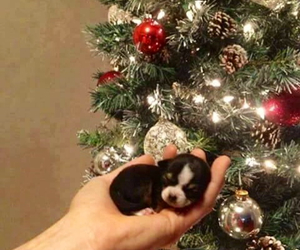 adorable, christmas tree, and cutie image