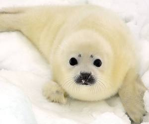cute animals, pup, and seal image
