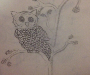 owl, three, and drawing image