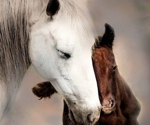 baby, chevaux, and white image