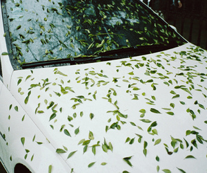 car and nature image