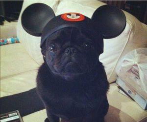 disney, dog, and mickey ears image