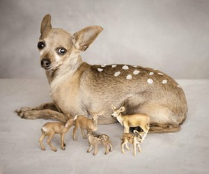 dog, bambi, and cute image