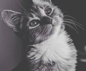 beautiful, kitten, and sweet image
