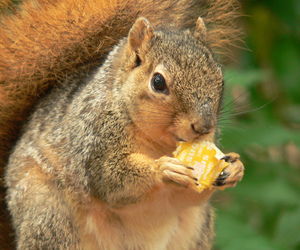 squirrel and sugus image