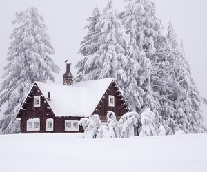 winter, cottage, and forest image