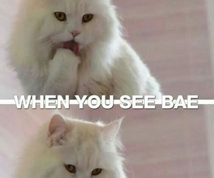 bae, cat, and funny image
