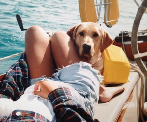 dog, summer, and boat image