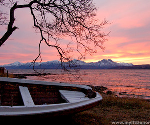 boat, sunset, and tree image