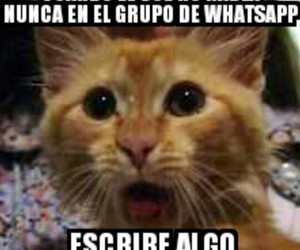 frases, memes, and chistosas image