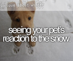 pet, snow, and winter image
