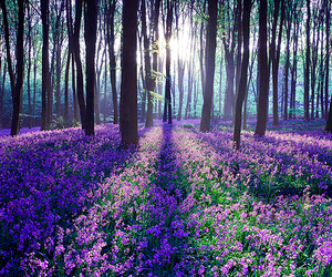 flowers, forest, and tree image