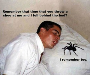 spider, funny, and bed image