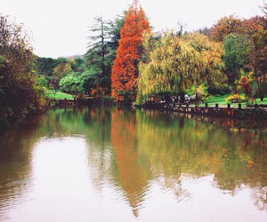 autumn, green, and cold image