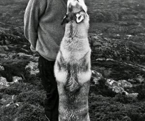 dog, boy, and wolf image