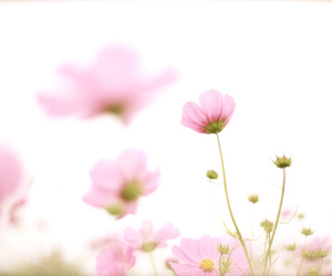 flower and pink image