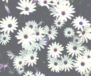 background, black, and flower image