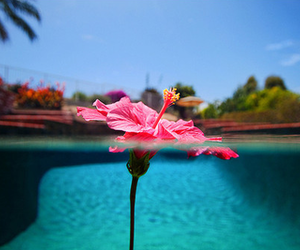 flowers, pool, and roses image