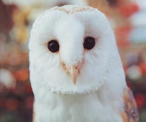 owl, animal, and white image