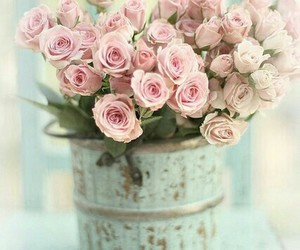roses pink flowers image
