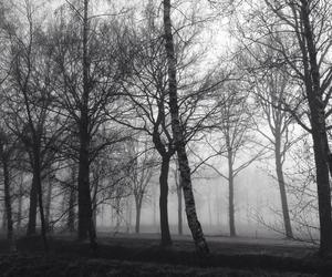black and white, fog, and grunge image