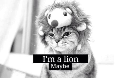 cat, lion, and funny image