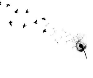 birds, black and white, and flower image