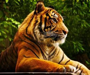 brown, tiger, and wild image