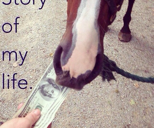 horse and money image