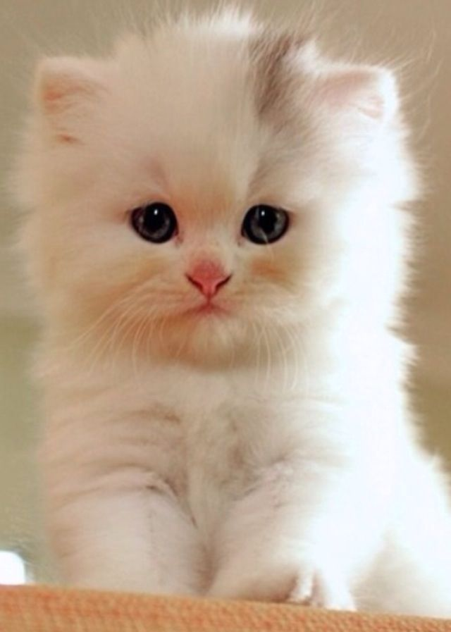 awesome, cat, and kitten image
