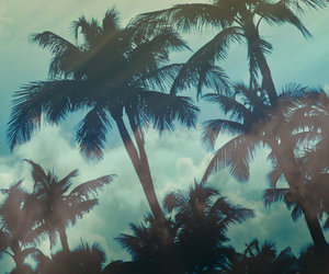 blue, Hot, and palmtrees image