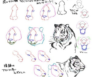 tiger, animal, and Easy image