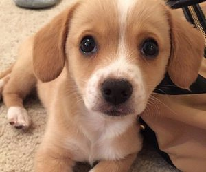 puppy and baby animals image