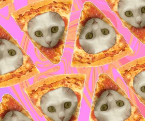 cat and pizza image