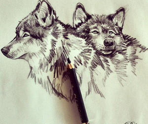 wolf, drawing, and pencil image