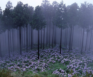 beautiful, forest, and lilac image