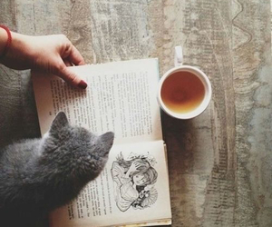 book, the, and cat image