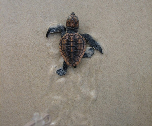 turtle and trop mignon <3 image
