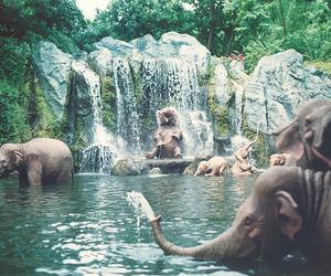 beautiful, elephant, and waterfall image