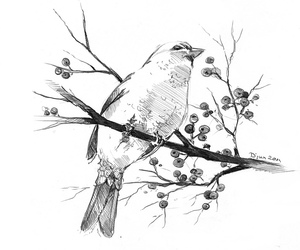 bird and art image