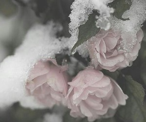 grunge, pastel, and pretty image