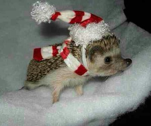 christmas and hedgehog image