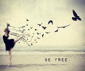 bird, free, and beach image