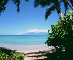 beach, tropical, and nature image