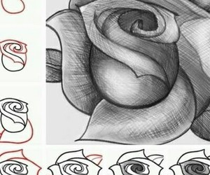 drawing and roses image