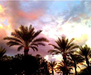 palm trees and sunset image