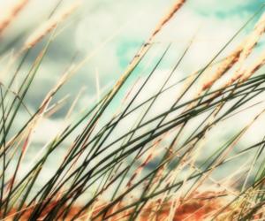 corn, nature, and wind image