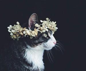 beautiful, flowers, and cat image