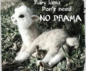baby, lama, and cute image