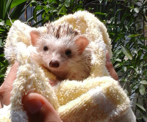 hedgehog, so cute, and love image
